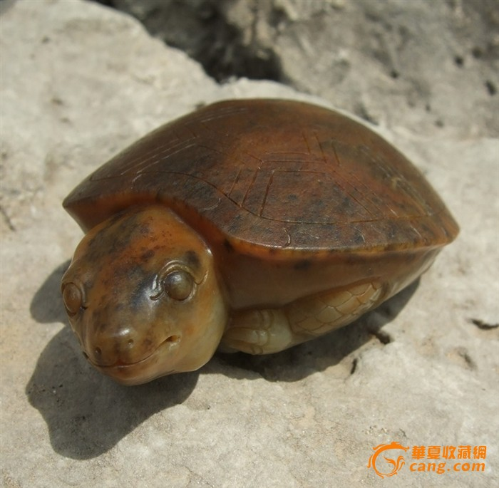 长寿龟_长寿龟拍卖_竞价_价格_交易